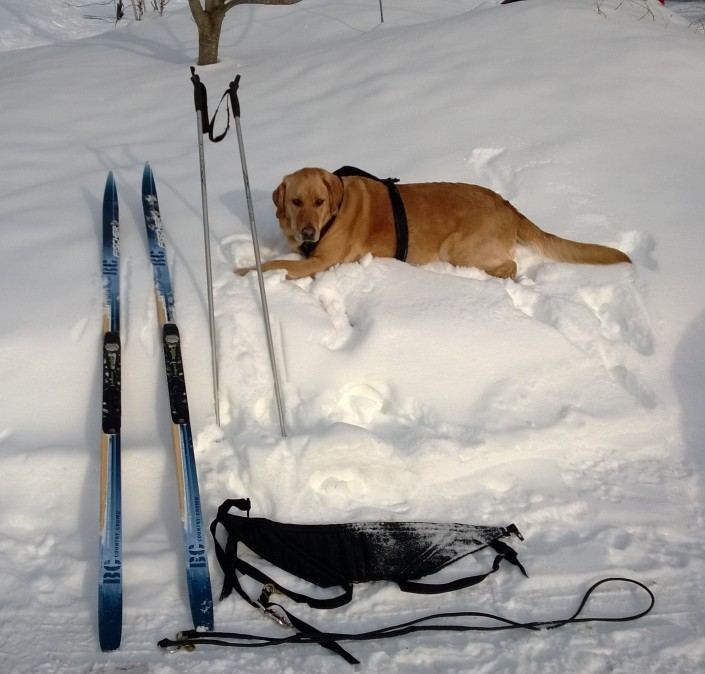 Skijoring equipment